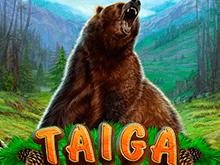 Автомат Тайга с бонусами в онлайн-казино